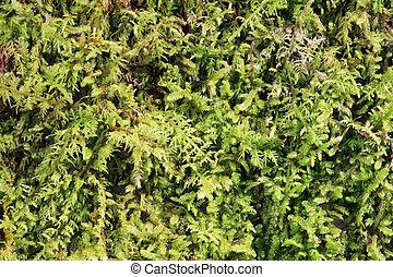 green moss background close up macro image