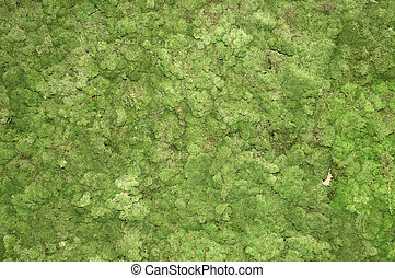 green moss background in nature