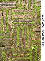 Green moss brick background