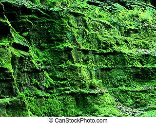 Green Moss Canyon Wisconsin