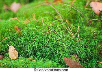 Green moss .Close-up .Shallow depth-of-field.