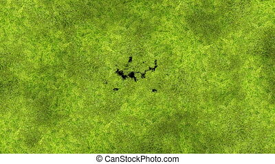 Green Moss Covering the Screen Beautiful Animation. Growing...