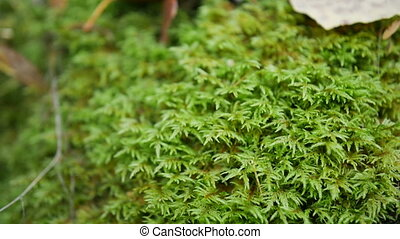 Green moss forest. Background - Green moss forest Background...