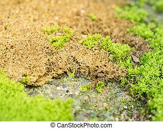 Green moss grow on old wall