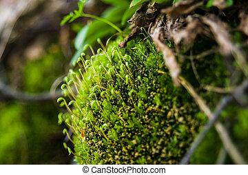 Green moss growing on a rock