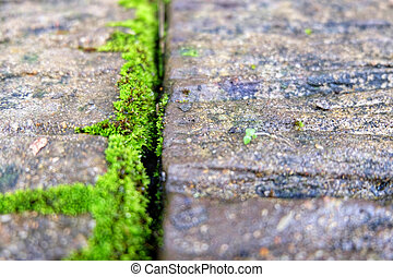 Green moss growing on concrete.