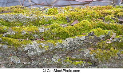 Green moss growth on the trunk of an tree