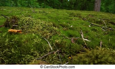 Green moss in the forest - Sliding over green moss in the...