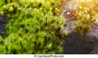 Green moss in the forest.