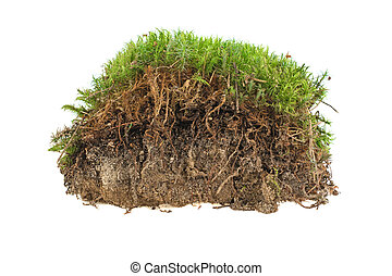 green moss in the sand, ground on a white background