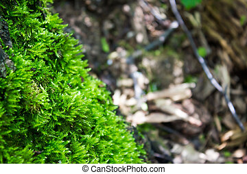 Green moss in the summer forest