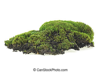 Green moss isolated on a white background, close up.