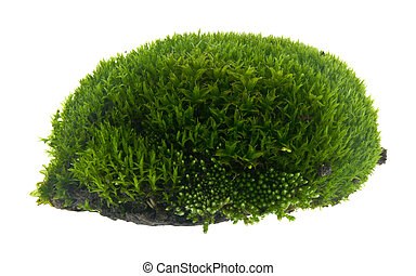 Green moss isolated on a white background close-up.