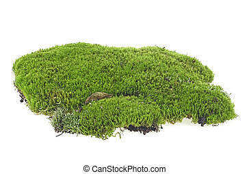 Green moss isolated on a white background closeup, macro.