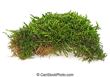 Green moss isolated on a white background, closeup.