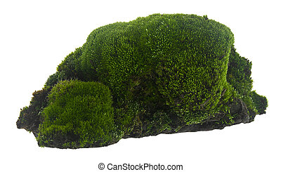 Green moss isolated on a white background.