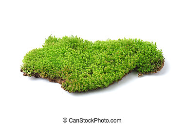 Green moss isolated on white bakground