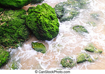 Green moss lichen background, Stone With Green moss lichen,