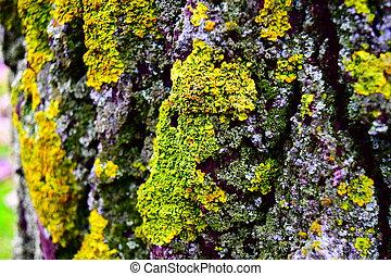 green moss, mushroom on a tree trunk