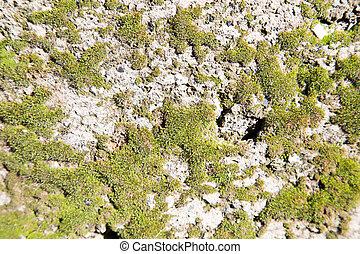 green moss on a concrete wall