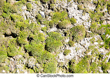 green moss on a concrete wall