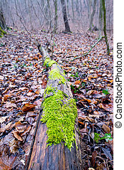 Green moss on a trunk in the autumn forest