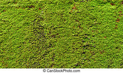 Green moss on old concrete wall