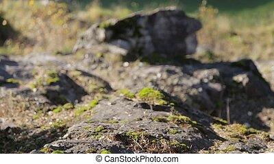 Green moss on rocks canyon
