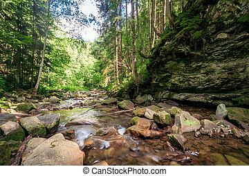 green moss on rocks near a stream in forest