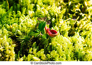 Green moss on stone in a summer forest