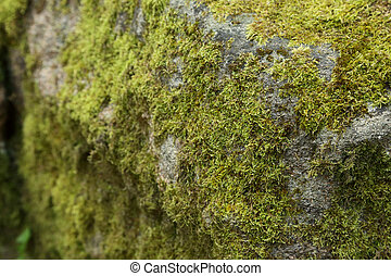 Green moss on stone in the forest