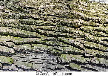 green moss on the bark of an old tree