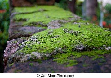 Green moss on the bricks