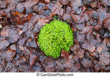 Green moss on the ground with fallen leaves
