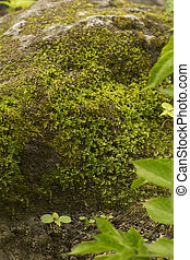Green moss on the old stone