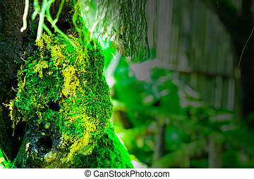 Green moss on the tree. Macro of moss on timber in rainy season.
