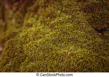 Green moss on the tree