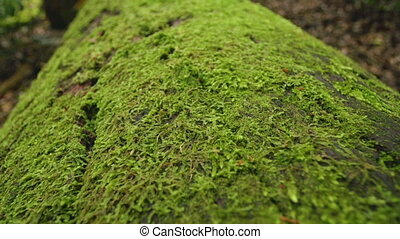 Green moss on tree branch - A macro shot of moss on tree...