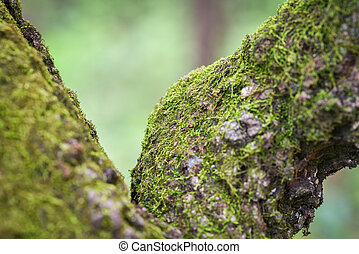 green moss on tree trunk in the nature jungle rainforest