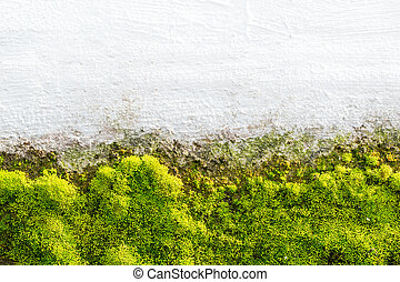green moss on white wall