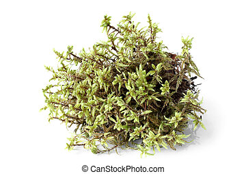 Green moss (Pleurozium schreberi) on white bakground