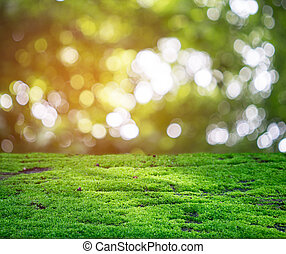 Green moss shining in the rays of sunlight