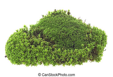 Green moss with grass isolated on a white background. Forest moss. Natural moss.