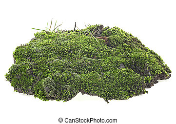 Green moss with grass on pile of dirt isolated on a white background