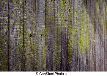 Green moss wood fence high shadow