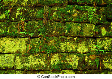 Green mossy wall background