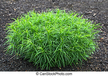 Green Mound Plant