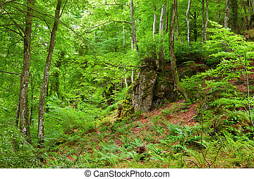 Green mountain forest in Pyrenees, France, 2009