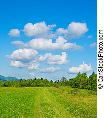 green mountain meadow in spring