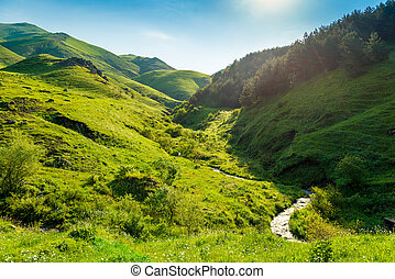 Green mountain meadows flooded with bright summer sun in Armenia